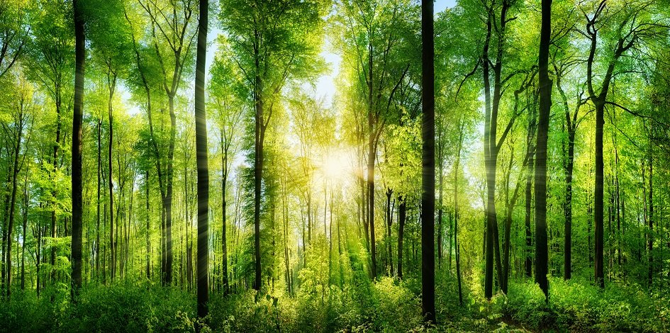 Green and ESG bonds: what's behind their rise?