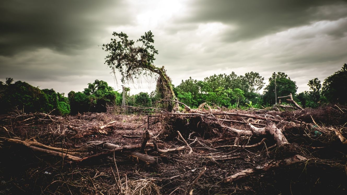 The 'E' in ESG: 4 charts on water stress and deforestation