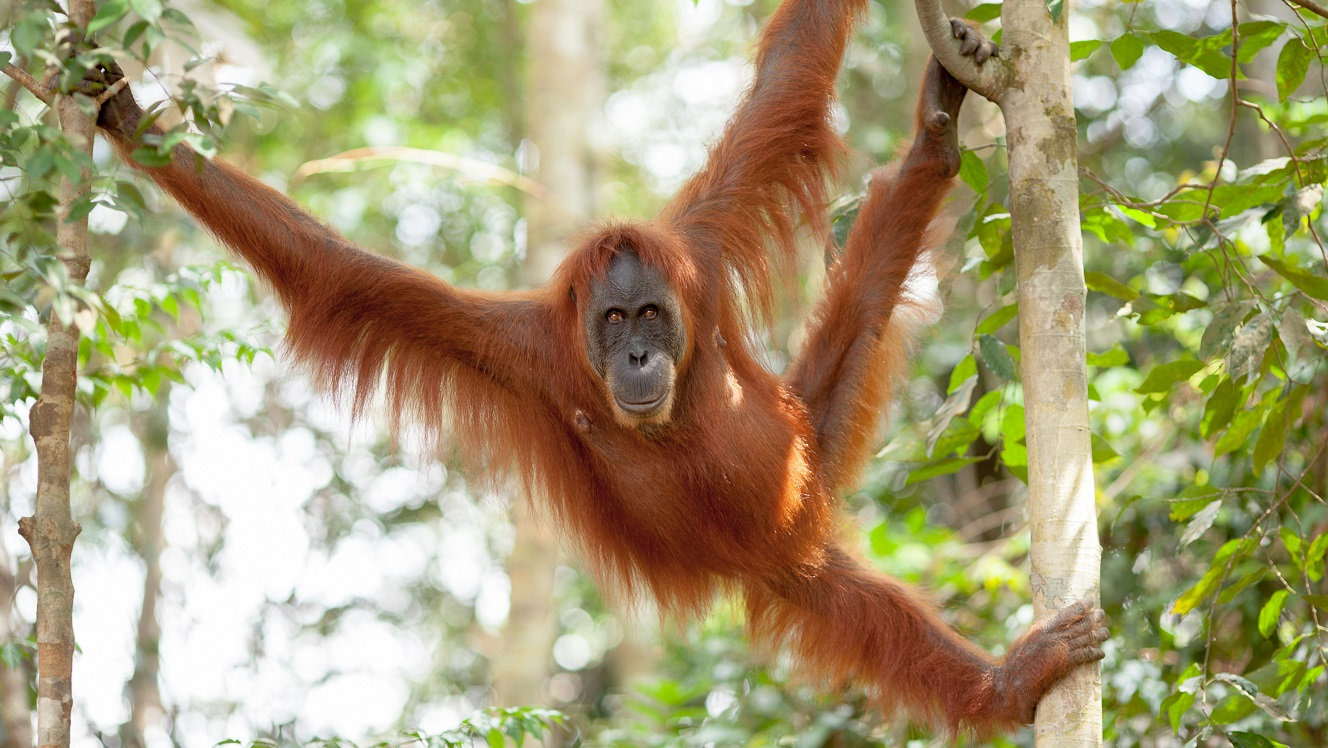 ESG issues will prevent palm oil producers joining the new commodity boom