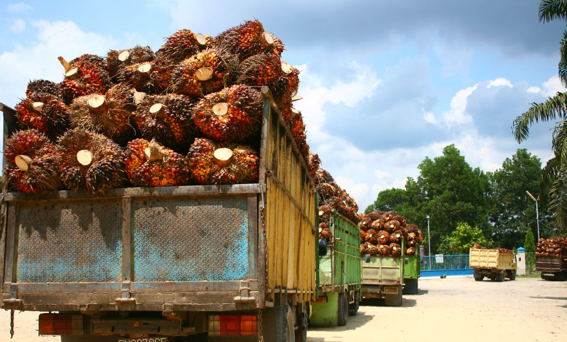 Malaysia's emergency declaration will accelerate palm oil boom