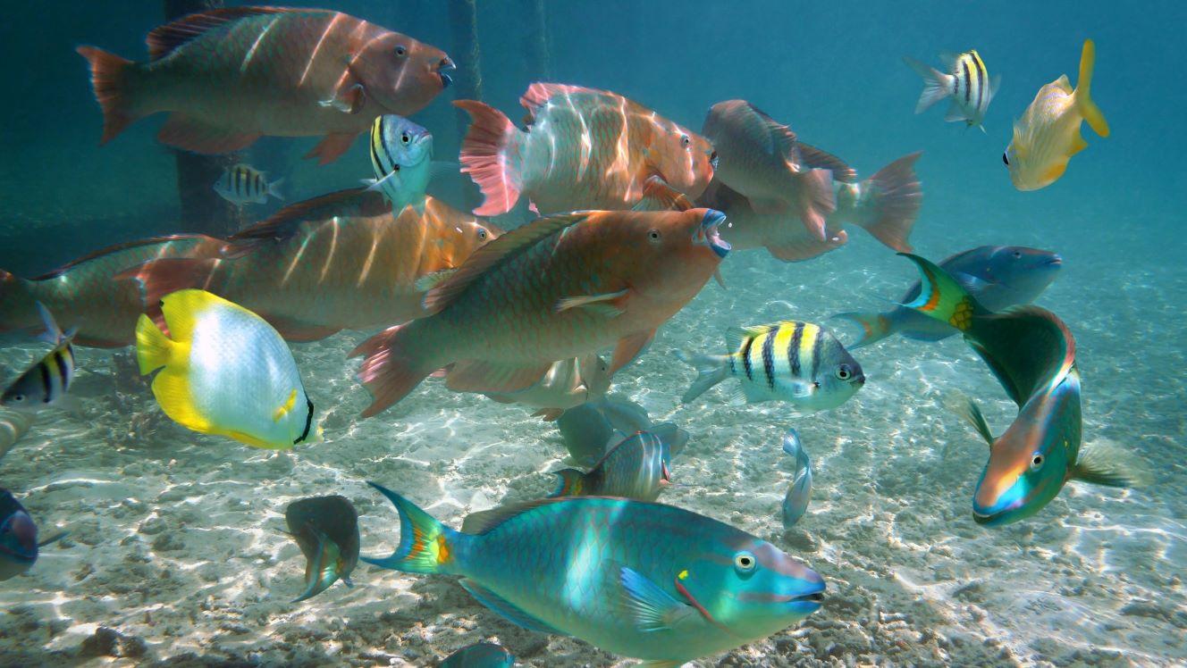 Belize launches cash tender offer in 'debt-for-ocean' swap